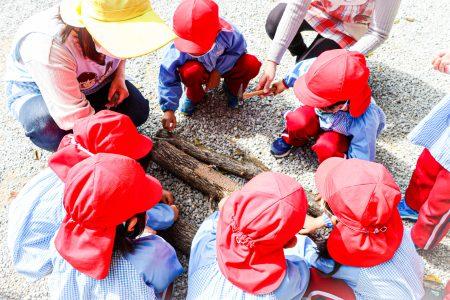 椎茸の栽培🍄
